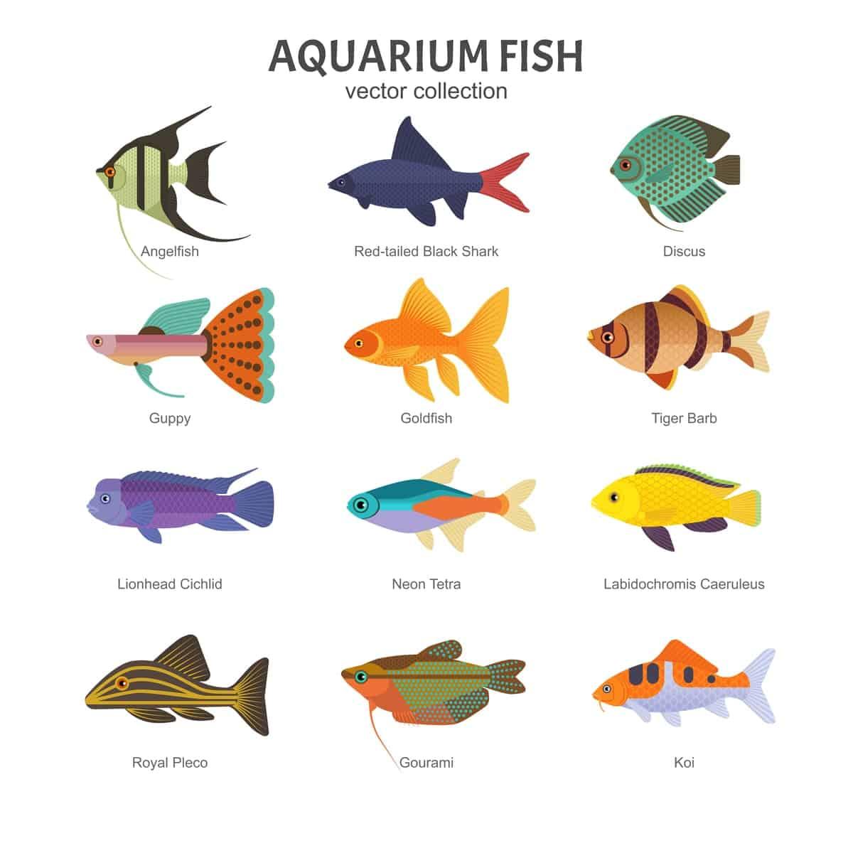 Akvaariokaloja