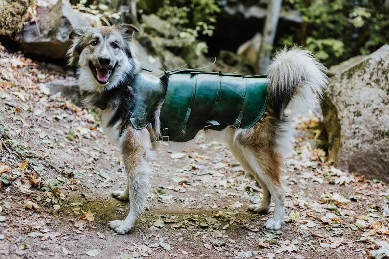 Koirien nahkaiset haarniskat